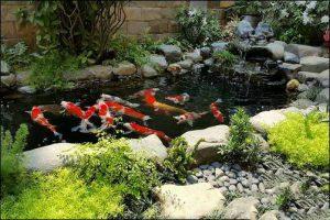 Thiết kế tiểu cảnh sân vườn chuyên nghiệp