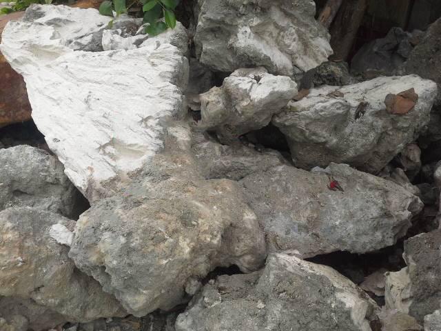 cách làm hòn non bộ bằng đá san hô